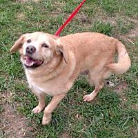 Adopt A Pet :: Pearl - Benton, PA