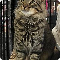 Adopt A Pet :: Leo - Horsham, PA