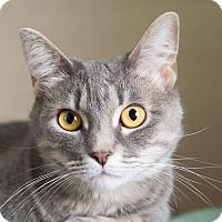 Adopt A Pet :: Freya - Wheaton, IL