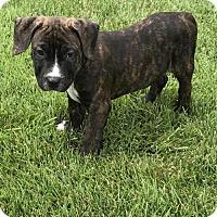 Adopt A Pet :: Carlos - Charleston, WV