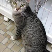 Adopt A Pet :: Cara - Las Cruces, NM