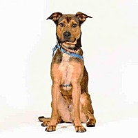 Adopt A Pet :: SAM - Vero Beach, FL