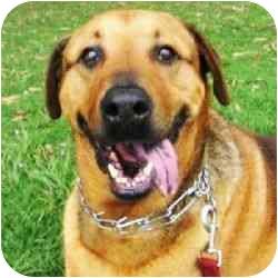 Labrador Retriever/Hound (Unknown Type) Mix Dog for adoption in Berkeley, California - Sphere