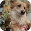 Photo 4 - Corgi Mix Dog for adoption in Sherman Oaks, California - Socrates
