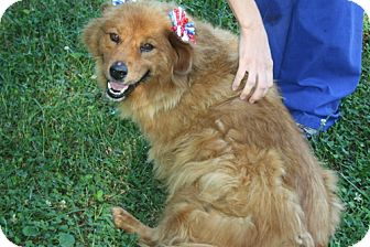 Chow Chow/Golden Retriever Mix Dog for adoption in Homewood, Alabama - Brownie
