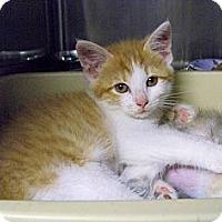 Adopt A Pet :: Flo - Dover, OH