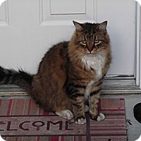 Adopt A Pet :: Buffy - Richmond, VA