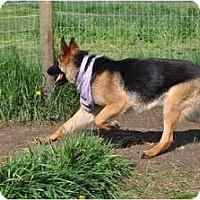 Adopt A Pet :: Reba - Hamilton, MT