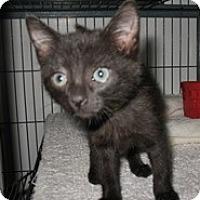 Adopt A Pet :: Ruthie - Shelton, WA
