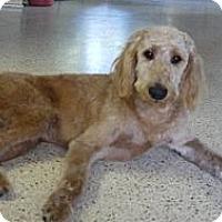 Adopt A Pet :: FL - Choco - Boca Raton, FL