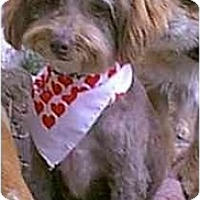 Adopt A Pet :: Cassandra - dewey, AZ