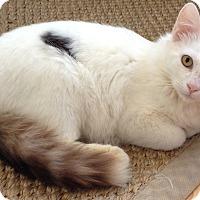 Adopt A Pet :: TOFU - Diamond Bar, CA