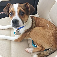 Adopt A Pet :: Scooter - Knoxville, TN
