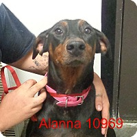 Adopt A Pet :: Alanna - Greencastle, NC