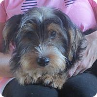Adopt A Pet :: Tug Boat - Greenville, RI