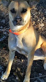 Labrador Retriever/Terrier (Unknown Type, Medium) Mix Dog for adoption in Sunbury, Ohio - Bess