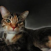 Adopt A Pet :: Moretta - New York, NY