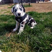 Adopt A Pet :: Cajun - Bowie, MD