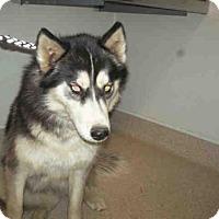 Adopt A Pet :: A1057872 - Bakersfield, CA