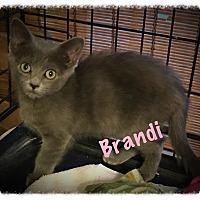 Adopt A Pet :: Brandi - Cleveland, TN