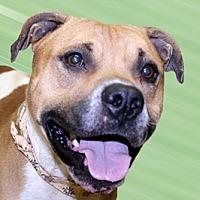 Adopt A Pet :: Dipstck - Cincinnati, OH