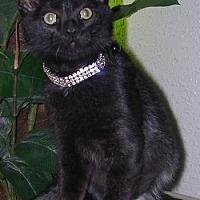 Adopt A Pet :: Maisha - Davis, CA
