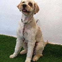 Adopt A Pet :: Aldo - San Diego, CA