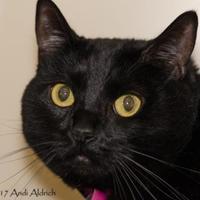 Adopt A Pet :: Babes - Kennewick, WA