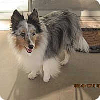 Adopt A Pet :: Blair - apache junction, AZ