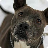 Adopt A Pet :: Lil Girl - Tinton Falls, NJ