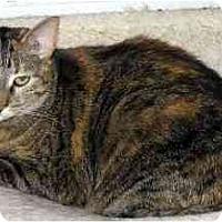 Adopt A Pet :: Nicki - Sheboygan, WI
