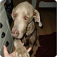 Adopt A Pet :: Rocky - Eustis, FL