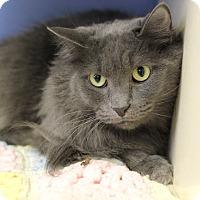 Adopt A Pet :: Giuseppe - Chicago, IL