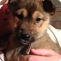 Adopt A Pet :: Uranus - Saskatoon, SK