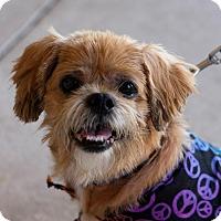 Adopt A Pet :: BJ - Holmes Beach, FL