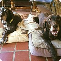 Adopt A Pet :: Gemma - Cumming, GA