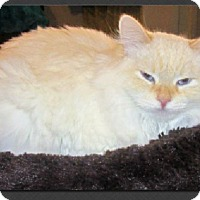 Adopt A Pet :: Toodles - Gilbert, AZ