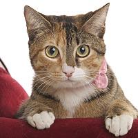 Adopt A Pet :: Penny - Wayne, NJ