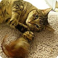 Adopt A Pet :: Jessie - Chandler, AZ