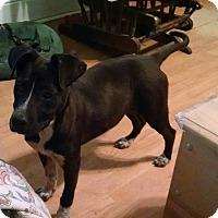 Adopt A Pet :: Marsha - Greensboro, GA