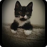 Adopt A Pet :: Bojangles - Richmond, VA