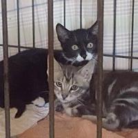 Adopt A Pet :: Fawn - Marina Del Ray, CA