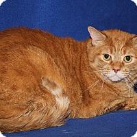 Adopt A Pet :: Lowell (Neutered) - Marietta, OH