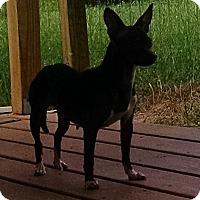 Adopt A Pet :: Winky - Gallatin, TN