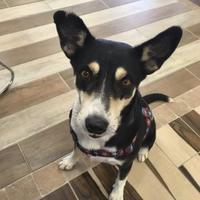 Adopt A Pet :: Trinity - Dothan, AL