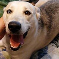 Adopt A Pet :: Indigo - Spring, TX