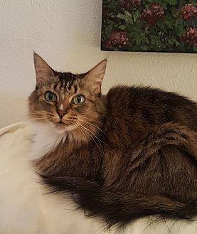 Adopt A Pet :: Emmy  - Houston, TX