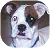 Boxer Dog for adoption in Hamilton, Ontario - Gem