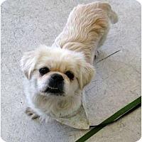 Adopt A Pet :: Otis - Tyler, TX