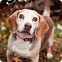 Adopt A Pet :: Geo - Schererville, IN